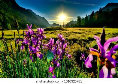 Orchids near lake weitsee in reit im winkl bavaria