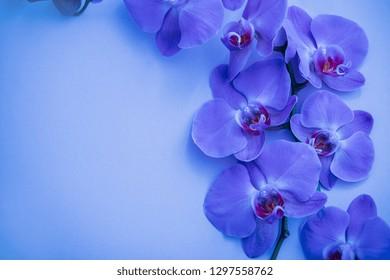 Blue Purple Orchids Images Stock Photos Vectors Shutterstock