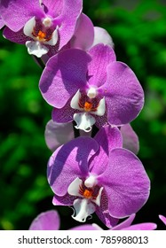Orchids are some of the most commonly grown houseplants.
