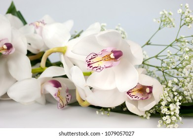 orchids for the spouses