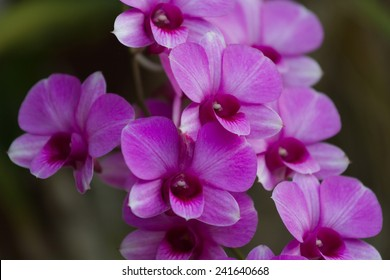 Orchids violet beautiful bouquet in a garden