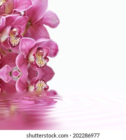 Orchids with whirlpool, water reflection