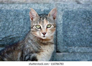 Ordinary domestic cat with nice green eyes on gray stone background
