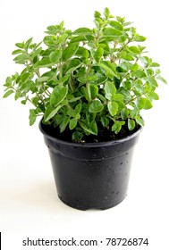 oregano herb as aromatic condiment for meal