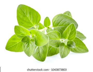 Oregano leaves in closeup