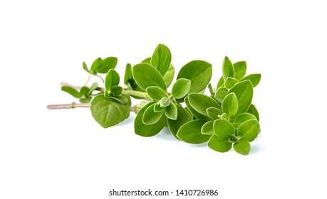 Oregano or marjoram leaves isolated on white background