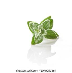 Oregano (Origanum) leaves close-up isolated on white  background
