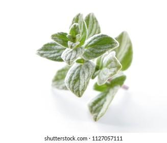 Oregano (Origanum) leaves close-up on white  background