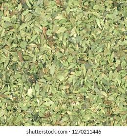 Oregano (Origanum vulgare) herb aka wild marjoram or sweet marjoram