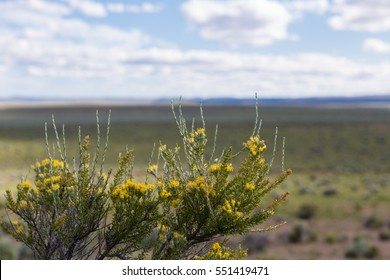 Oregon desert sagebrush blooms in the spring painting the normal brown landscape in green and yellow