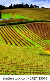 Oregon Farmland  ( wine country)