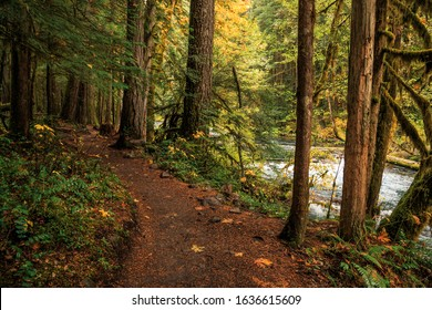 Oregon Forest in the Willamette National Forest