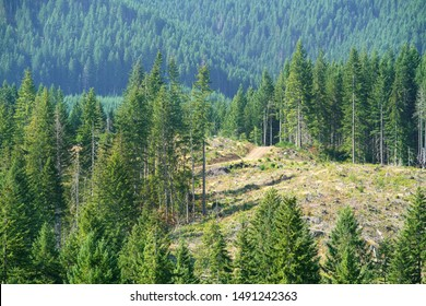 Oregon forests in various stages of timber harvesting.  Clear cutting in background with replanted trees.