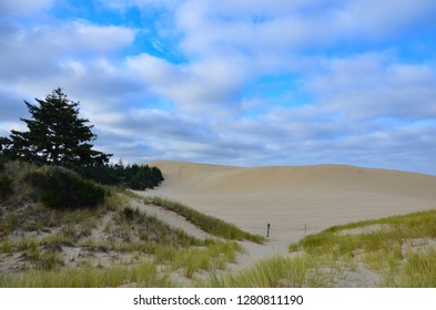 Oregon sand dunes near the Pacific Scenic Byway, conifers and grass, cloudy sky, sunny