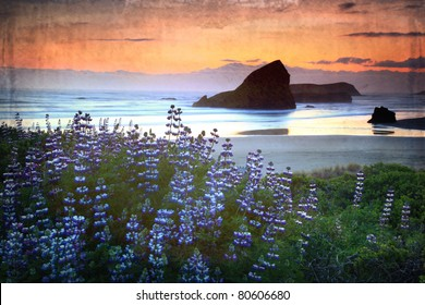 Oregon sunset along the coast with lupine in the foreground and a vintage finish