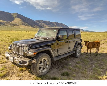 Oregon/United States-July 5 2019: Vehicle and cow make friends in nature
