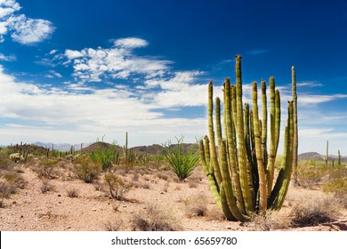 The Organ Pipe Cactus national monument, Arizona