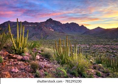 Organ Pipe Cactus National Monument at sunrise.