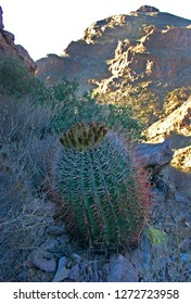 Organ pipe national park, Arizona - Large plants ferocactus with red spines hooks