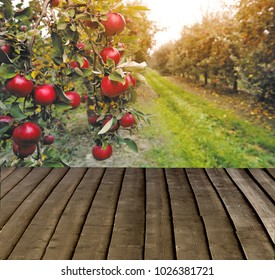 Organic apples hanging from a tree branch in an apple orchard. Wiew with wooden pier. Empty ready for your product display montage.