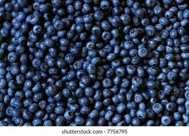 Organic blueberry background