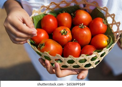 Organic bright red tomatoes, non-toxic