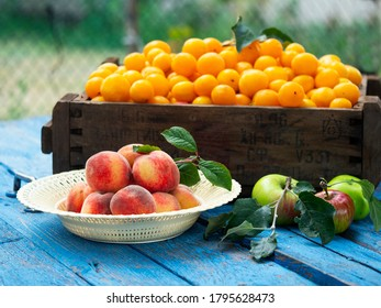 Organic cherry plums in vintage box, bowl with peaches and apples on weathered blue wooden surface against garden background