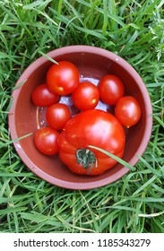 organic cherry tomato and tomato,homegrown vegetables