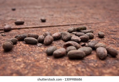 Organic Cocoa beans in little cocoa farm in Costarica jungle