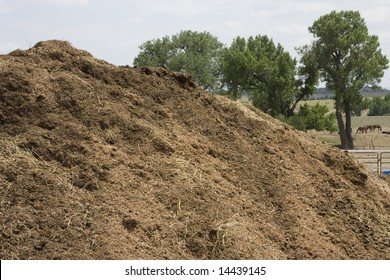 Organic Compost Pile