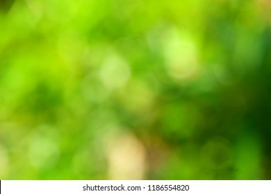 Organic design nature abstract background-  blurred natural image.