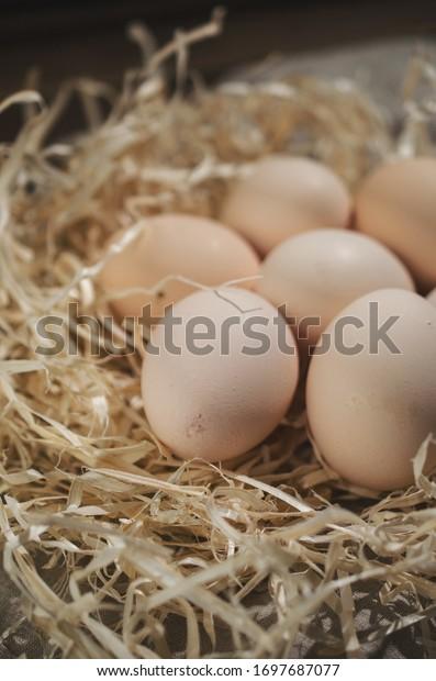 Organic easter eggs on hay