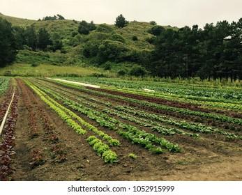 Organic farm agriculture