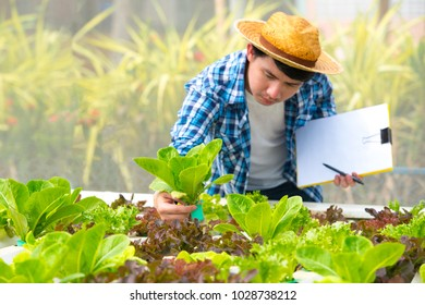 Organic farm with agriculture vegetable hydroponic. organic vegetable is business agriculture growing. Farmer using technology hydroponic cultivation vegetable organic in greenhouse.