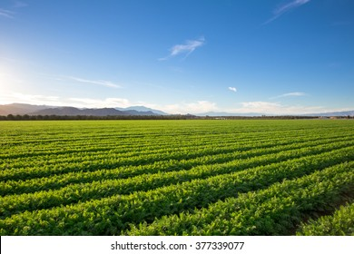 Organic Farm Land Crops In California Blue skies, palm trees, multiple layers of mountains add to this organic and fertile farm land in California.