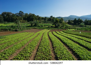 Organic farm in Luang Prabang, Laos