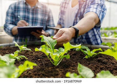 Organic farm ,Worker testing and collect environment data from bok choy organic vegetable at greenhouse farm garden.