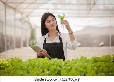organic farmer holding laptop monitoring their organic to grow organic grown vegetables.biotechnology scientist in white suit with tablet for working organic hydroponic