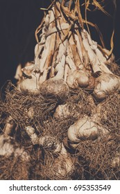 Organic farming background. Dirty garlic bulbs gathered on field at ecological farm. Harvest at agricultural production business.