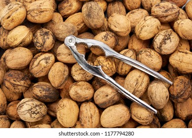 Organic food concept of fresh harvested walnuts and nutcracker.