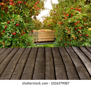 Organic Fresh Apples in a wooden crate in an apple orchard. Fall harvest. iew with wooden pier. Empty ready for your product display montage.