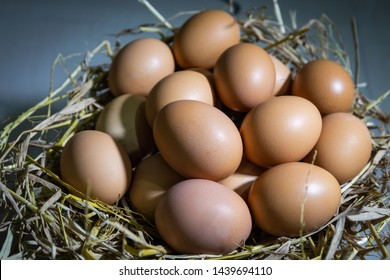 Organic fresh eggs in the nest ready for cooking