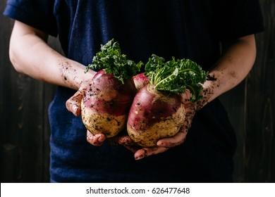 Organic fresh harvested vegetables. Farmer's hands holding fresh swede, closeup.