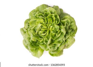 Organic fresh Salanoca Descartes lettuce. isolated on white background