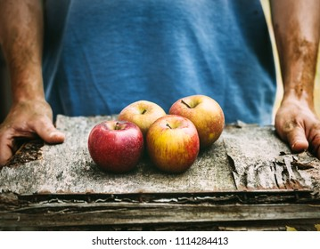 Organic fruit and vegetables. Farmers hands with freshly harvested apples.