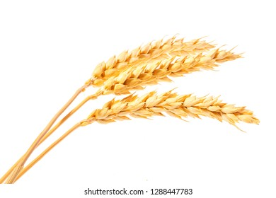 organic grain,gluten free,ears of wheat  isolated on a white background
