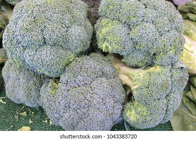 Organic green broccoli