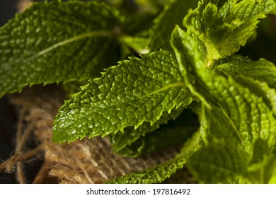 Organic Green Mint Leaf in a Bowl