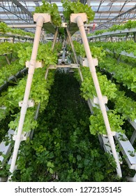 an organic greenhouse vegetables planting on substrates. high technology of organic greenhouse. fully control atmosphere glasshouse planting system