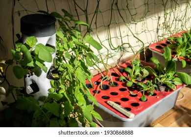 Organic hydroponic garden box and verticulture garden. Hydroponic home garden. Urban gardening.